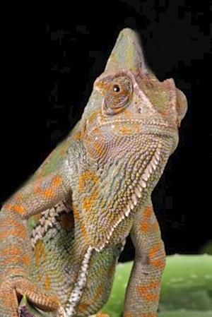 Bog, paperback Veiled Chameleon Portrait Journal af Cool Image