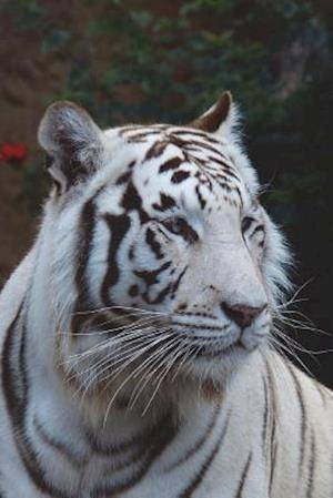 Bog, paperback White Tiger Journal af Cool Image
