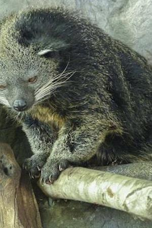 Bog, paperback Arctictis Binturong, for the Love of Animals af Unique Journal