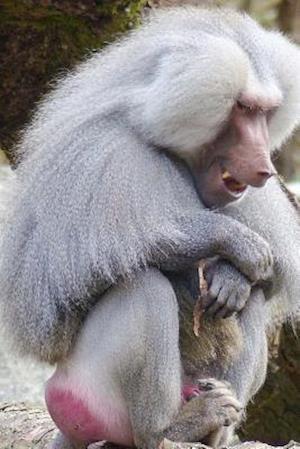 Bog, paperback Hamadryas Baboon Sitting, for the Love of Animals af Unique Journal