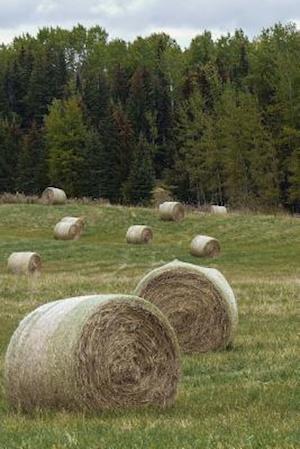 Bog, paperback A Field of Hay in Idaho af Unique Journal