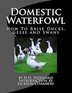 Domestic Waterfowl