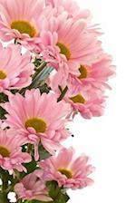 Beautiful Pink Chrysanthemums Floral Arrangement