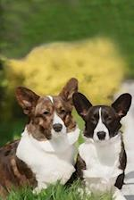 Cardigan Welsh Corgi af Artified Pets