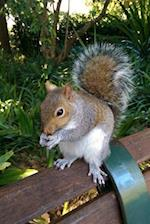 Cute Squirrel on a Park Bench Journal
