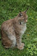 A Seated Lynx Big Cat Journal