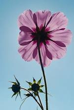Pastel Purple Cosmos Flower Portrait Journal