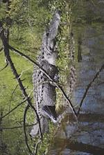 Alligator Resting on the Bank Journal