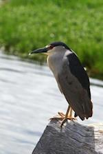 Black-Crowned Night Heron Journal
