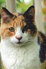 Cute Calico Cat Journal