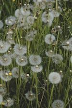 Field of Fluffy Dandelions Journal