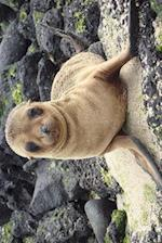 A Galapagos Sea Lion Poses for You Journal