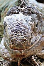 Iguana Portrait Journal