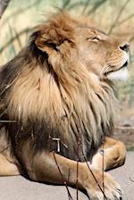 A Lion Sniffs the Air Journal