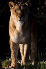 Lioness Checking You Out Journal