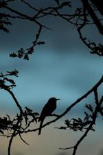 Little Bee-Eater Bird Silhouette (Merops Pusillus) Journal