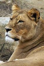 Lovely Lioness Journal