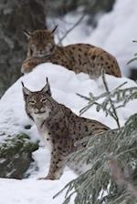 The Lynx in Winter Journal