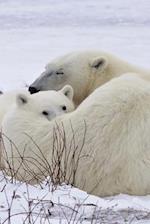 Baby Polar Bear Cub Resting on Mom Journal