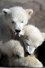 Two Playful Polar Bear Cubs Journal