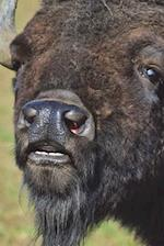 Say Hello to the American Bison Journal