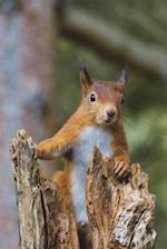 Say Hello to the Red Squirrel Journal