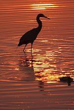 Wading Bird at Sunset Journal