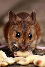 Wood Mouse (Apodermus Sylvaticus) Journal