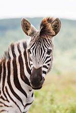 Zebra Checking You Out Journal