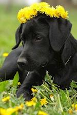 Black Labrador Retriever Wearing a Crown of Yellow Dandelions Journal
