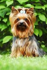Adorable Little Yorkshire Terrier with a Blue Bow Dog Journal
