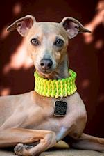Italian Greyhound with a Yellow and Green Collar Dog Journal