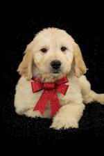 Goldendoodle Puppy with a Red Bow Designer Dog Journal