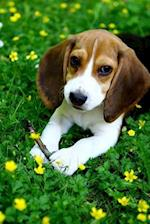 Cute Beagle Puppy in the Park Journal