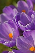 Purple Crocus Flowers Journal