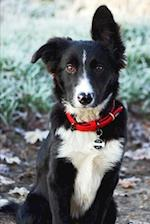 Adorable Black and White Border Collie Dog Journal