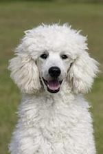 Fluffy White Poodle Dog Journal