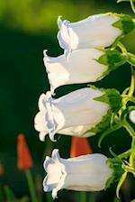 White Bellflowers Plant Journal