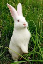 A Little White Bunny Rabbit in the Grass Journal