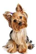 A Cute Little Yorkshire Terrier with a Purple Scrunchie Dog Journal