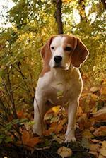 Cute Beagle Walking in the Woods Dog Journal