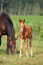Young Foal in a Pasture with His Mother Horse Journal