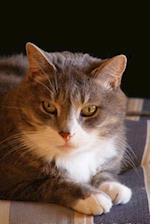 Gray and White Domestic Short Hair Cat Journal