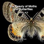 The Beauty of Moths and Butterflies