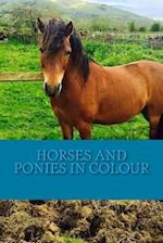 Horses and Ponies in Colour