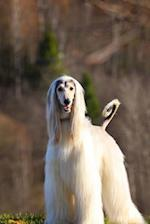 Gorgeous White Afghan Hound Dog Journal