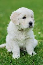 An Adorable Baby Swiss Shepherd Puppy Sitting in the Grass Journal