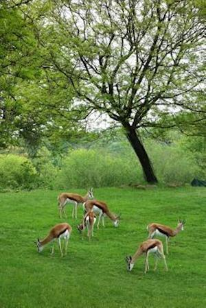 Bog, paperback Antelopes in a Green Field af Unique Journal