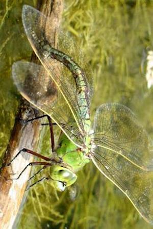 Bog, paperback Anax Imperator Female Dragonfly Laying Eggs af Unique Journal