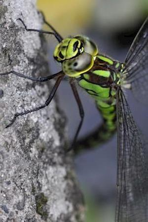 Bog, paperback Aeshna Cyanea Southern Hawker Dragonfly af Unique Journal